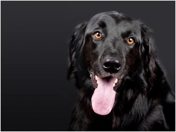 El seguro para tu perro es importantísimo.
